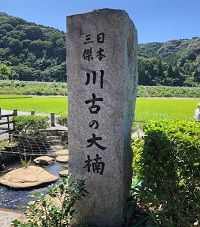 takeo-tree-stone monument